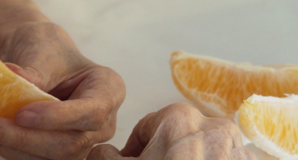Orangers en fleur